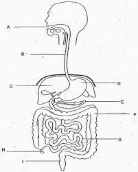 Fine gi diagram images electrical diagram ideas piotomar info