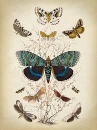 Butterfly Poster Butterfly Print Butterflies Wall Decor