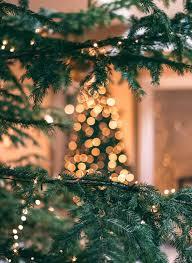 Easiest Way To Check Christmas Lights Rockin Around The Zero Waste Christmas Tree How To Make