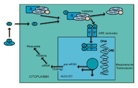 corticosteroides sinteticos pdf