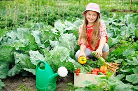Kitchen Gardener An Image Of A Nice Little Girl In The Kitchen Garden Stock Photo