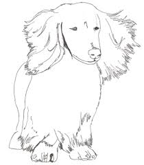 Picturesque Design Dachshund Coloring Pages For Adults To Print Book