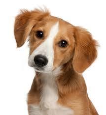 hond braken diarree lusteloos