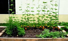full size of backyard raised garden ideas bed wonderful easy appealing diy beds and design
