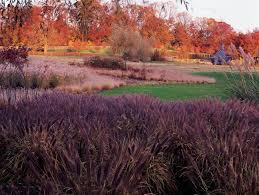 Small Picture How to Design a Rain Garden Garden Design