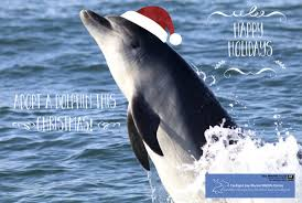 cbmwc news on twitter adopt a dolphin for a gift order this weekend in time for xmas day just 30 a great gift for marine enthusiasts