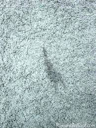 how to get pet urine smell out of carpet super easy way rid that cat