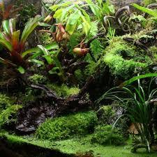 build a rainforest terrarium