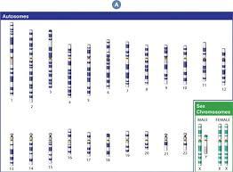 X Chromosome Inheritance Chart X Chromosomal X Dna Testing The Family Tree Guide To Dna