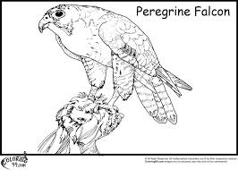 Small Picture Baby Falcon Coloring Pages Coloring Coloring Pages