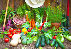 easy vegetable garden plants in spring vegetable garden 1
