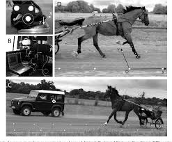 Figure 1 From Equine Hoof Slip Distance During Trot At