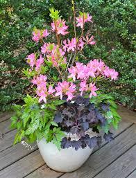 Shade Garden Ideas  HGTVContainer Garden Ideas For Shade