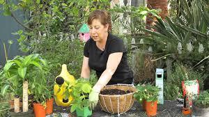 Kitchen Garden Vegetables Kitchen Vegetable Gardens Grown In Hanging Baskets Garden Space