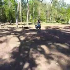 Australian Shepherd dogs - Posts | Facebook