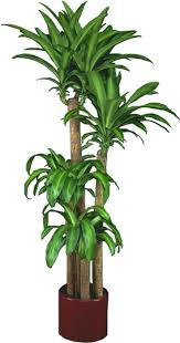 low light plants indoor house best images on inside tropical