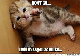 Don't go....... - Helpless Kitten Meme Generator Captionator ... via Relatably.com