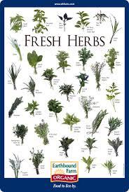 Herb Plant Identification Chart Herb Plants Identification Garden Design Ideas