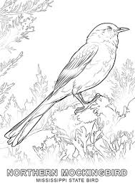 bird coloring pages. Beautiful Coloring Mississippi State Bird Coloring Page In Coloring Pages O
