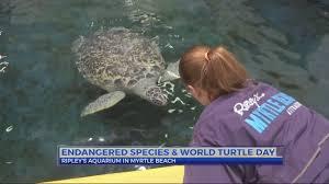 Ripley's Aquarium celebrates Gabby the Green Sea Turtle this weekend