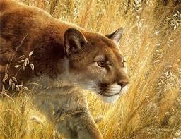 cougar puma mountain lion painting by carl brenders the predators walk