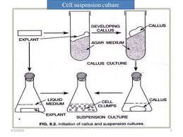 Tissue Culture Flow Chart Tissue Culture