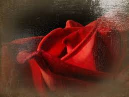 red rose oil painting digital painting by sabrina mejias