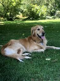 Der Hundemantel So Bringst Du Deinen Vierbeiner Warm Durch