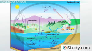 cycles of matter the nitrogen cycle and the carbon cycle video cycles of matter the nitrogen cycle and the carbon cycle video lesson transcript com