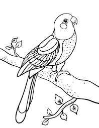 Small Picture Free Parrot Coloring Page