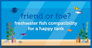 Petco Fish Chart Petco Introduces A Freshwater Compatibility Chart Aquanerd
