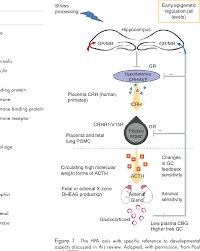 Hpa Axis Figure 1 From Fetal And Neonatal Hpa Axis Semantic Scholar