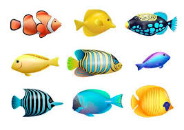 coral reef fish drawing. Delighful Fish Set Of Drawings Bright Exotic Tropical Fish From Coral Reefs Vector  Graphics Stock With Coral Reef Fish Drawing H