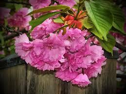spring nature backgrounds. Floristry, Spring Flowers, Flower Background, Pink Flowering Plant, Beautiful Nature Backgrounds, Woody Backgrounds