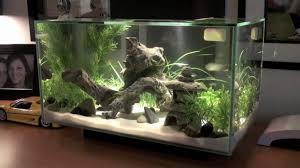 fish tank lighting ideas. Fish Tank Lighting Ideas