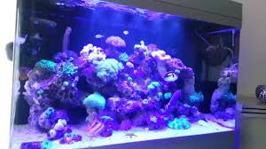 Led Lights For Red Sea Max 250