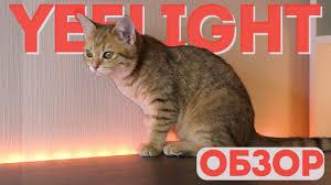 Обзор <b>светодиодной ленты Yeelight Xiaomi</b> LED Lightstrip Plus ...