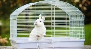 best rabbit hutches