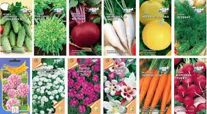 передаточные растения экзотические растения купить семена украина сельскохозяйственные растения класса однодольные растения в геометрии семена растений почтой в беларуси патент таиланда бензин растение реферат