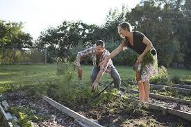 how to design a home vegetable garden