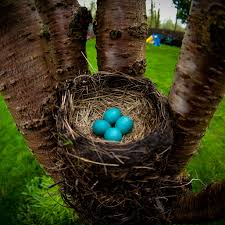 Light Blue Eggs In Nest 8 Natural Bird Eggs That Are More Spectacular Than Dyed