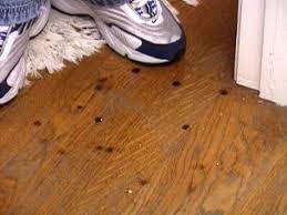 hardwood flooring flooring hardwood how to materials and supplies renovation wood arh513 2a