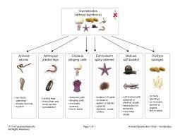 Animal Classification Chart Invertebrates Chart Invertebrates