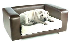 dog leather couch s chewed