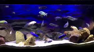 fluval eco bright led system lake malawi african cichlid tank best led lighting epic light you