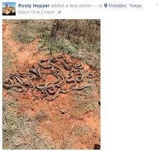 a group of north texas hunters found a diffe kind of game when they discovered a