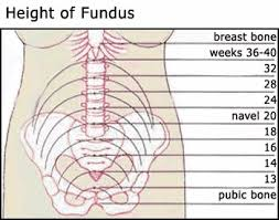 Fundal Height Chart Enough With The Baby Movement Posts