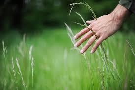 la coscienza delle piante
