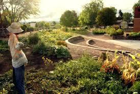 denver garden centers. Urban Gardens Denver Community Garden At Green School Store Centers
