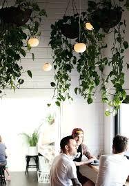 indoor hanging garden ideas hanging plants hanging plants indoor garden ideas indoor vertical garden plans